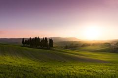 A9906500_s (AndiP66) Tags: boscettodeicipressi boscetto zypressen cypresses cipressi zypressenwäldchen sanquiricodorcia sanquirico sonnenuntergang sunset nebel dunst fog mist sonne sun evening abend april spring 2017 siena pienza valledorcia valle dorcia toscana tuscany italien italy sony alpha sonyalpha 99markii 99ii 99m2 a99ii ilca99m2 slta99ii tamron tamronsp1530mmf28diusd tamron1530mm 1530mm f28 amount andreaspeters
