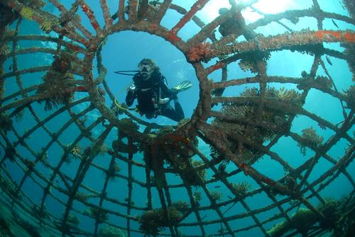 0610-Reefproject_Pondok_Sari,_R.Lipmann