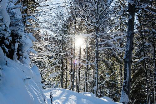 Winterforest (Snowshoe-Tour Brülisau - Plattenbödeli - Ruhsitz - Brülisau)