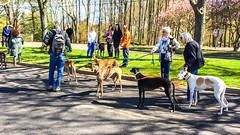 van saun earth day walk-15 (Visual Thinking (by Terry McKenna)) Tags: greyhound paramus newjersey unitedstates us van saun park