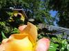 IMG_3314 (reuse) Tags: mayflowers