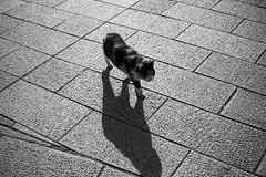 cat (NEKOFighter) Tags: cat neko nikon japan bw ねこ 猫 straycat 大分 鉄輪