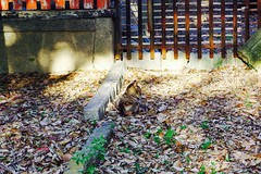 Today's Cat@2017-04-25 (masatsu) Tags: cat thebiggestgroupwithonlycats catspotting pentax mx1