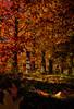 The-colour-of-fall_DSC9079 (Mel Gray) Tags: wollombi autumn newsouthwales australia trees leaves fall hunterregion huntervalley
