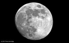 Tonight's Moon (Trevdog67) Tags: may 2017 moon astronomy sky night lalune themoon nikon d7100 sigma 600mm 15x teleconverter tc1401 850mm dx crop bw bn detail moncton newbrunswick nouveaubrunswick canada nature