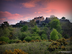 Stirling Castle from Gowanhill (Rollingstone1) Tags: stirlingcastle gowanhill stirling scotland fortress castle landscape scottish scene sky colour trees gorse wild nature