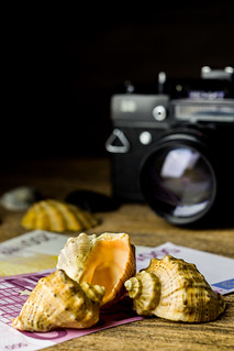 sea shells and old fotocamera on brown wooden table