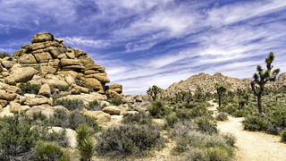 Boy Scout Trail, Joshua Tree National Park