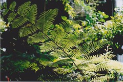 parc de la tete d'or 9 (annabelduggleby) Tags: pentax pentaxmesuper 35mm film filmisnotdead shootfilm analogue analog france travel exploring lyon botanic botanische botanischegarten parcdelatetedor green leaves plants pflanzen nature tropical