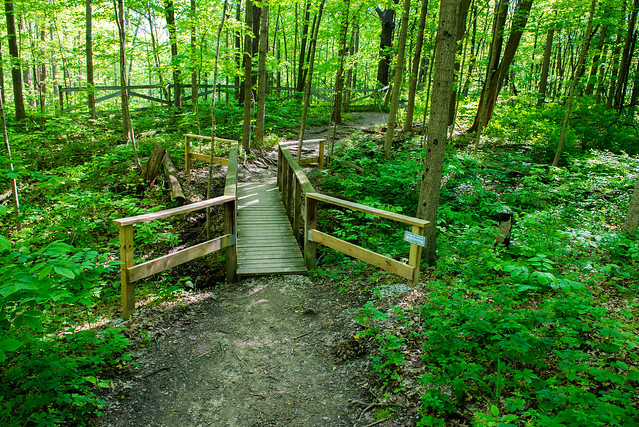 Ritchey Woods Nature Preserve - May 15, 2017