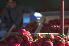Strawberry day (lfbarragan_19) Tags: fruits strawberries nature