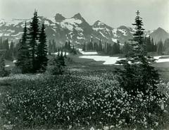 P1.WA1.009 (American Alpine Club Photo Library) Tags: thecastle pinnaclepeak plummerpeak denmanpeak tatooshrange mountrainiernationalpark lanepeak