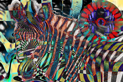 Protección (seguicollar) Tags: cebra textura círculo geométrico camuflaje rayas rayado canimal mamífero virginiaseguí imagencreativa photomanipulación art arte artecreativo artedigital