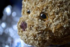 Teddy bear eyes (Veca.) Tags: eye macromondays teddy bear eyes