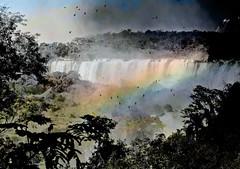 IMG_0143 Journey into dreamland (Rodolfo Frino) Tags: waterfall fall rainforest forest jungle iguazu trees water birds rainbow nature natura natur natural naturaleza paisaje paysage landscape