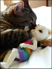 Sweet hugs .... (Essential Resinescence) Tags: chat cat tabby bjd resin pipos baha