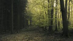 Spring Contrasts (Netsrak) Tags: baum eu eifel europa europe farbe forst landschaft natur wald forest landscape nature spring tree trees woods bäume frühling germany nrw nordrheinwestfalen ersdorf