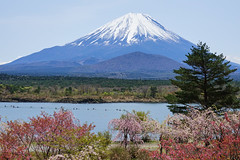colorful sight (peaceful-jp-scenery (busy)) Tags: mtfuji lakeshoji lakesyoji fuji5lakes fujigoko japan worldheritage 富士山 精進湖 他手合浜 富士河口湖町 山梨 日本 sony cybershot dscrx10m3 24600mmf2440 20mp