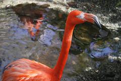 Key West (Florida) Trip 2016 0239Ri 4x6 (edgarandron - Busy!) Tags: florida keys floridakeys keywest bird birds butterflyhouse keywestbutterflyandnatureconservatory flamingo