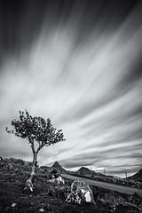 Stac Pollaidh and some whizzy clouds (amcgdesigns) Tags: andrewmcgavin assynt stacpollaidh badagyle 10stopfilter hitechprond tree monochrome blackandwhite scotland longexposure eos7dmk2 whizzy landscape