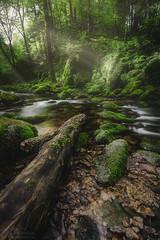 Geroldsau Forest (steinmetznicolas) Tags: 2017 cascade geroldsau schwartzwald germany wasserfall waterfall nature water longexposure sun beautiful forest nikon d610 1635 nisi blending photorefectoire