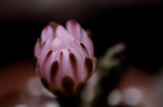 flower 1191