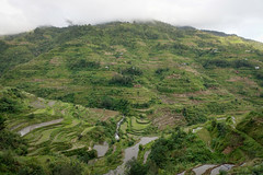 Mountain scenery in Banaue, Philippines (phuong.sg@gmail.com) Tags: agriculture amazing asia banaue beautiful china cloudscape color countryside cultivation destination ecology environment famousplace farm farming field food heritage highlands ifugaoprovince land landscape mirrorreflection mountain nature organic outdoor paddy philippines plantation reflection rice southeast terraces traditional travel unesco valley view village