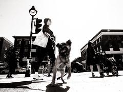 Sur la rue à Montréal (eric_demers) Tags: blackdiamond streetphotography street streetphoto streetphotographer noirblanc blackandwhite monochrome mono people montreal canada dog animal