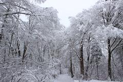 Snow (simon-pierrebellemare) Tags: arbre neige tree trees snow landscape quebec canada québec winter hiver parc paysage forest forêt cloud cloudy nuage nuageux