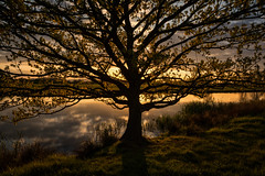 A tree by a river (cliveg004) Tags: tree oak oaktree spring sunset backlit river landscape croome croomepark worcestershire shadows rural countryside nikon d5200 1685mm