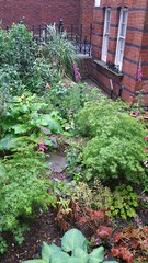20170517_084146 (Carol B London) Tags: sgc flowers floral stepney stepneygreencourt stepneygreen e1 londone1 flowering bushes residentgarden gardens ids