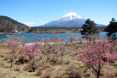 IMG_2004-1 (vincentvds2) Tags: lake shouji shoji lakeshouji shojiko shoujiko mountfuji mtfuji fujisan fuji