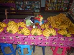 Banana Harvest (SierraSunrise) Tags: fruit banana musaceae thailand wiangkaen chiangrai