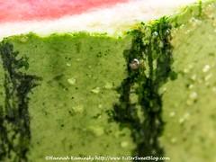 Watermelon (Bitter-Sweet-) Tags: vegan food healthy wholesome whole fruit vegetable macro closeup details ingredients fresh green watermelon rind cut