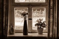Yesterday  (Explored XII.V.) (Nikonphotography D750) Tags: lostplaces poorlife poor minimal simplelife explore inexplore sonyphotography sonyalpha sonyalpha6000 sonyilce6000 e1670mmf4zaoss sony freilandmuseum museum bayern badwindsheim fränkischesfreilandmuseum yesterday light stilllife stillifephotography fenster window sepia sepiafotografie sepiaphotography