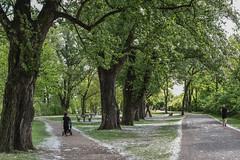 2017 am Scheideweg (mercatormovens) Tags: frankfurt city grosstadt deutschherrnufer weg spaziergängerin jogger bäume
