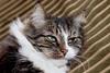 20170513 Sofia och Kaisers fest (Sina Farhat - Webcoast) Tags: light ljus sofia kaiser vince fest party katt cat hund dog people folk vår spring gothenborg göteborg sweden sverige 031 bokeh skärpedjup canon 50d canon50mm14usm canon580exii flash raw photoshopcc