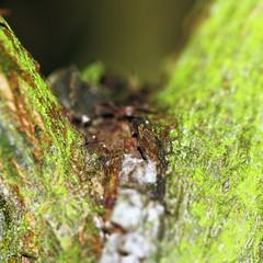 Ad Silvam .......135/365 (janano2010) Tags: macromondays member'schoiceintothewoods macromondaysmember'schoiceintothewoods green wood moss dark trees growth lichen adsilvam