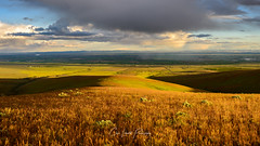 Overlooking Winchester, Grant County, WA (Chris Lakoduk) Tags: winchester grantcounty washington state quincy farm land landscape photography color clouds ground hills grass reeds rolling panorama stitch chris lakoduk rain haze view vista