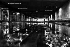reflected world (d26b73) Tags: streetphoto schwarzweiss monochrome urbanarte blackandwhite bw noiretblanc
