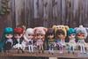 My Current Family (Project Doll House) Tags: mint babycatface dollies ruby cupcake curio birdie huakini tiina nori freddy tan poppy grumpyface scola dolls blythe doll blythedoll customblythe