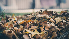 Autumn Fall (Hp-Imagery) Tags: autumn leaves brown cinematic earth sun happy bokeh canon tree nature art people