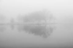 dim memories II (Mindaugas Buivydas) Tags: lietuva lithuania bw december winter fog mist minimal minimalism mood moody tree trees skirvyte skirvytė rusne rusnė delta nemunasdelta nemunodeltosregioninisparkas nemunasdeltaregionalpark river mindaugasbuivydas