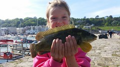 """Izzie Herbert's Ballan Wrasse • <a style=""""font-size:0.8em;"""" href=""""http://www.flickr.com/photos/113772263@N05/34009316463/"""" target=""""_blank"""">View on Flickr</a>"""