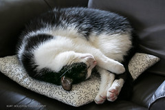 Kater Lucky (Kurt Hollstein) Tags: kater cat lucky indoor katze