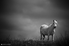 One Of a String (M:J:H:Photography) Tags: mono brecon beacons monochrome wales south pony ponies sky blackandwhite