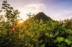 Wildflowers (=Heo Ngốc=) Tags: wildflowers sun ray colorful moutain vietnam ninhbinh tokina1116 nikond300