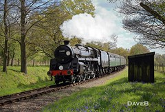 19th April 2017. Flying Scotsman and Service trains at the Bluebell (Dangerous44) Tags: bluebell railway steam engine locomotive 73082 camelot standard five