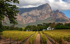 Franschhoek Wine Estate (Panorama Paul) Tags: paulbruinsphotography wwwpaulbruinscoza southafrica westerncape franschhoek wineestate mountains vineyard autumn nikond800 nikkorlenses nikfilters