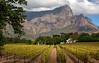 Franschhoek Wine Estate (Panorama Paul) Tags: paulbruinsphotography wwwpaulbruinscoza southafrica westerncape franschhoek wineestate mountains vineyard autumn nikond800 nikkorlenses nikfilters